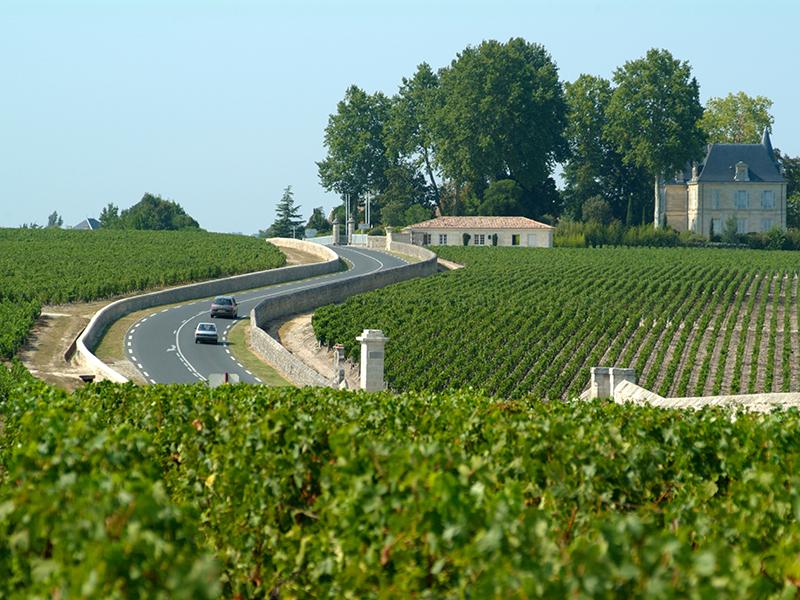 Road in-between vineyards in Haut-Médoc