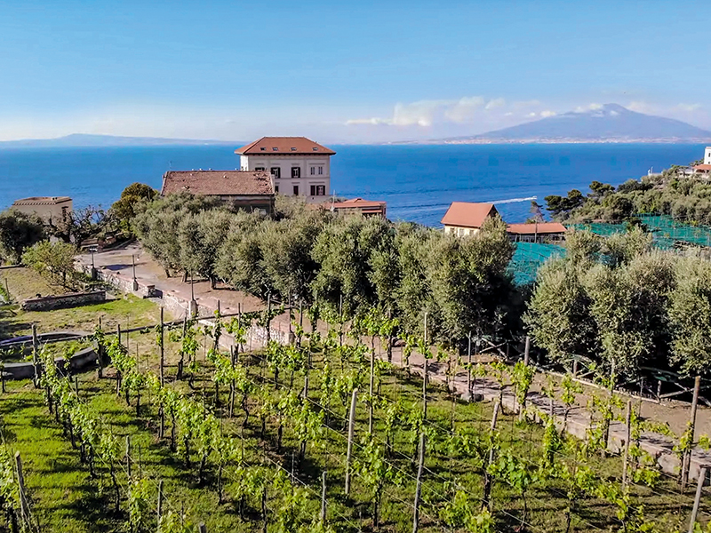 The vineyards and ocean views at Tenuta Sorrento