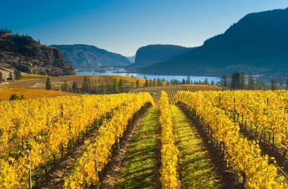 Take a Virtual Wine Vacation through the World's Top Emerging Vineyards