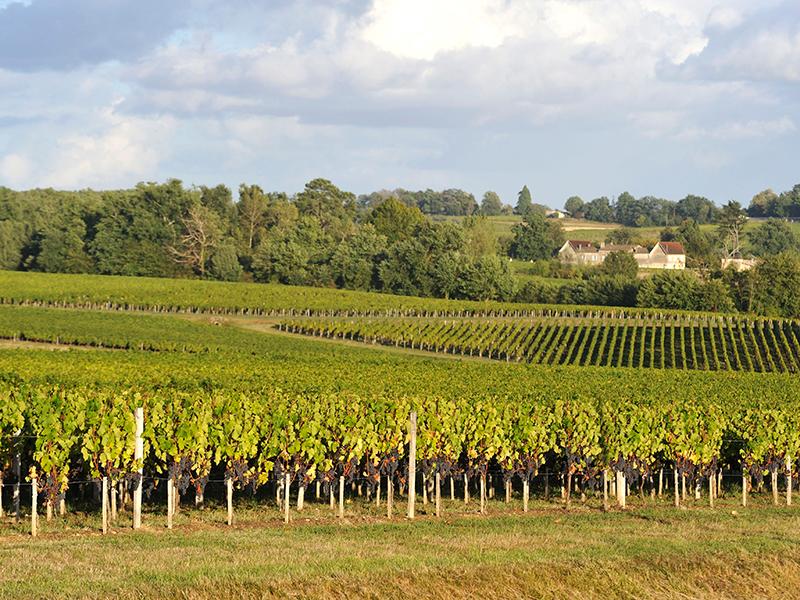 Lalande de Pomerol vineyards
