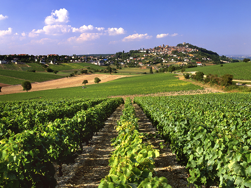 Late afternoon light illuminates view over vineyards leading to the hilltop town of Sancerre, Cher, France.