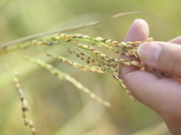 harvest of faith