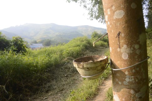 Tapping rubber and the village we spent the night in.