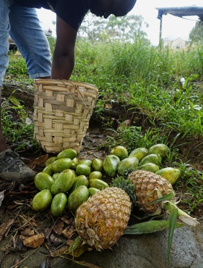 A large pile of mangoes, pineapples and bananas in front of a woven basket