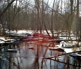 An icy pond in a forest with snow surrounding the water