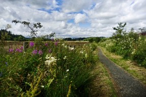 A flat path lined with wildflowers under a blue sky with white clouds on the West Highland Way