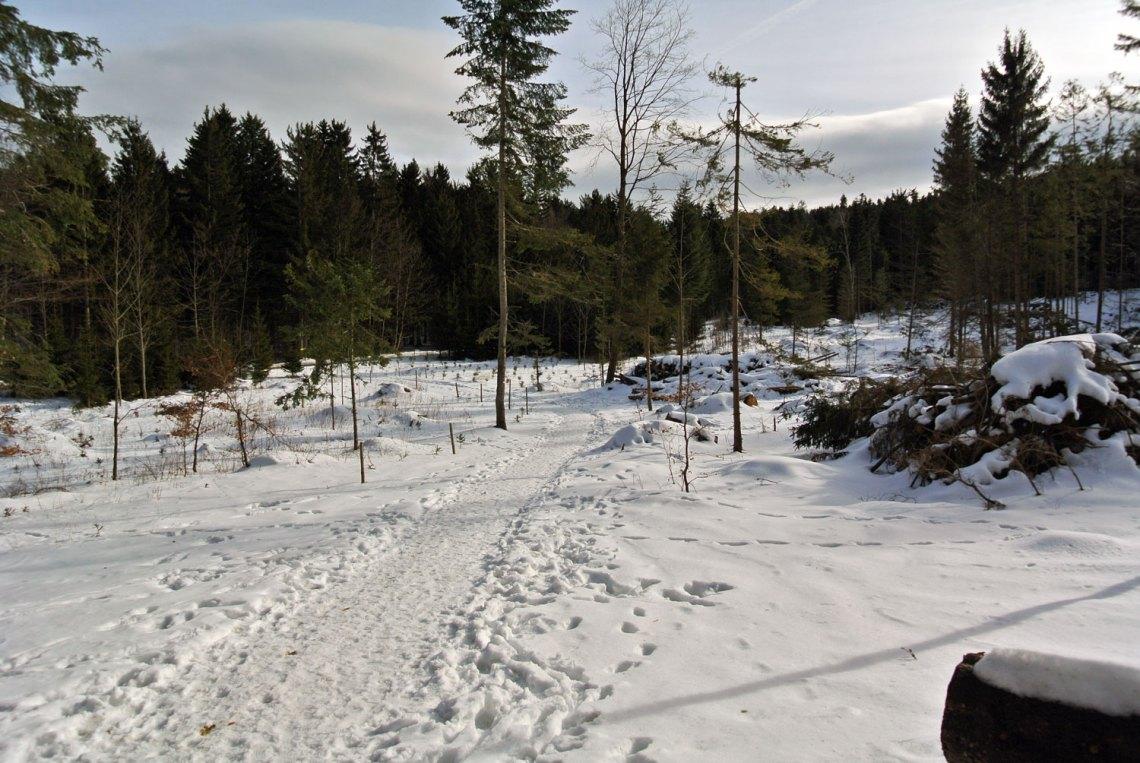 Winterwandern im Naturpark Hohe Wand