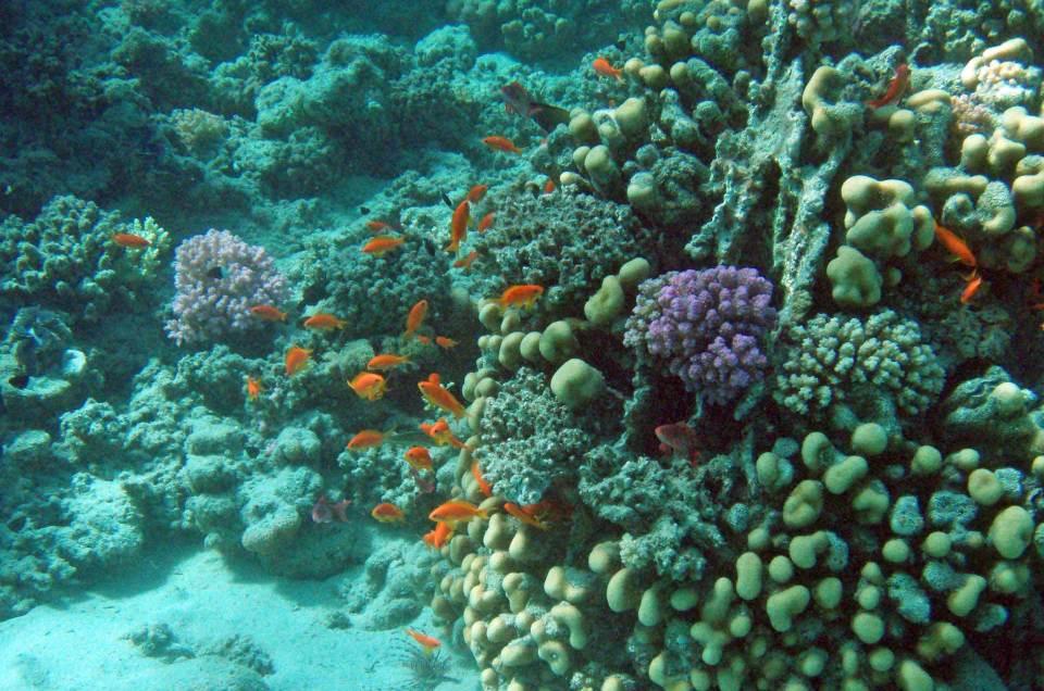 Riff in Marsa Alam