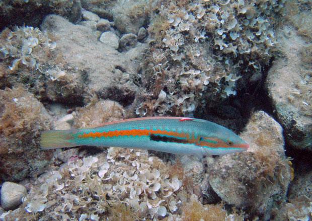 Fisch in Sveta Marina