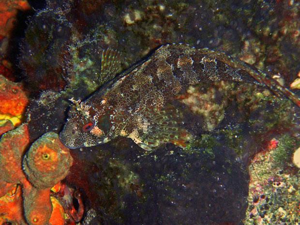 Der Fisch in Sveta Marina ist kaum zu erkennen