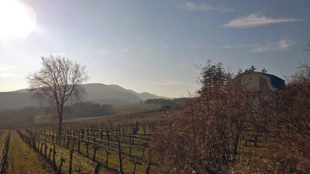 Weingärten in Liesing