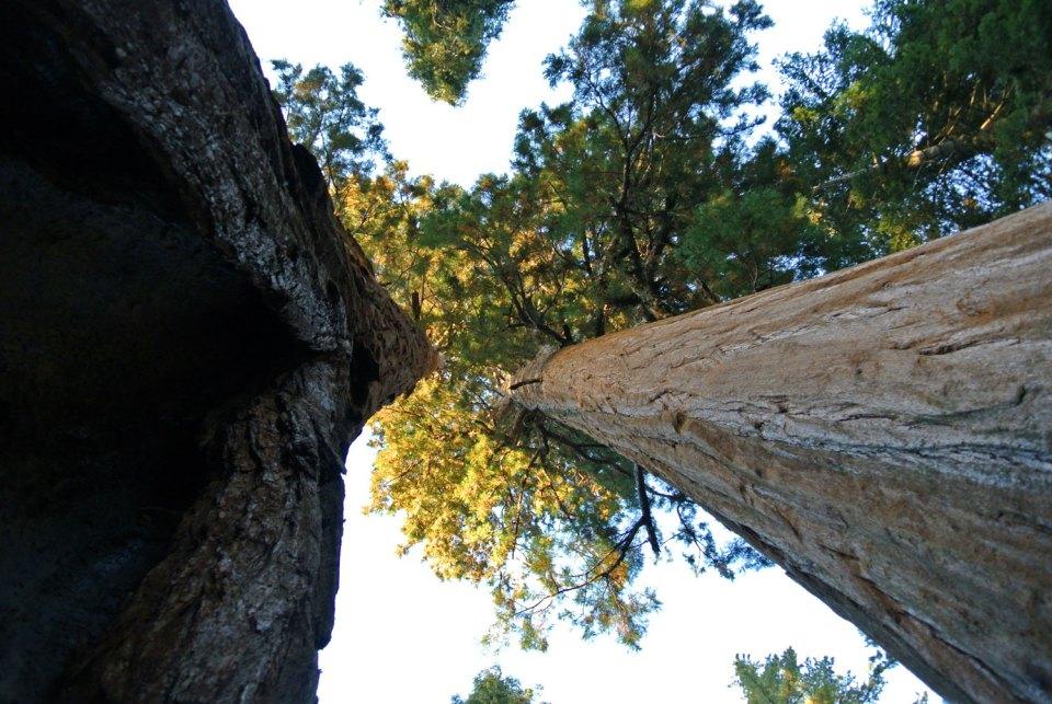 Sequoia und Kings Canyon National Park in Kalifornien, USA