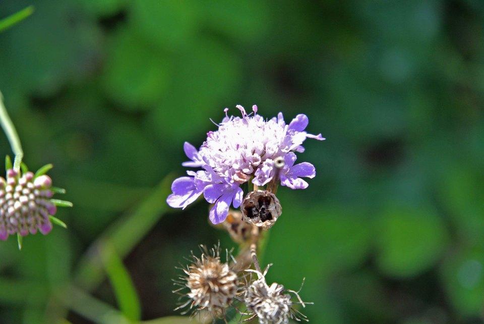 Blume im Botanischen Garten