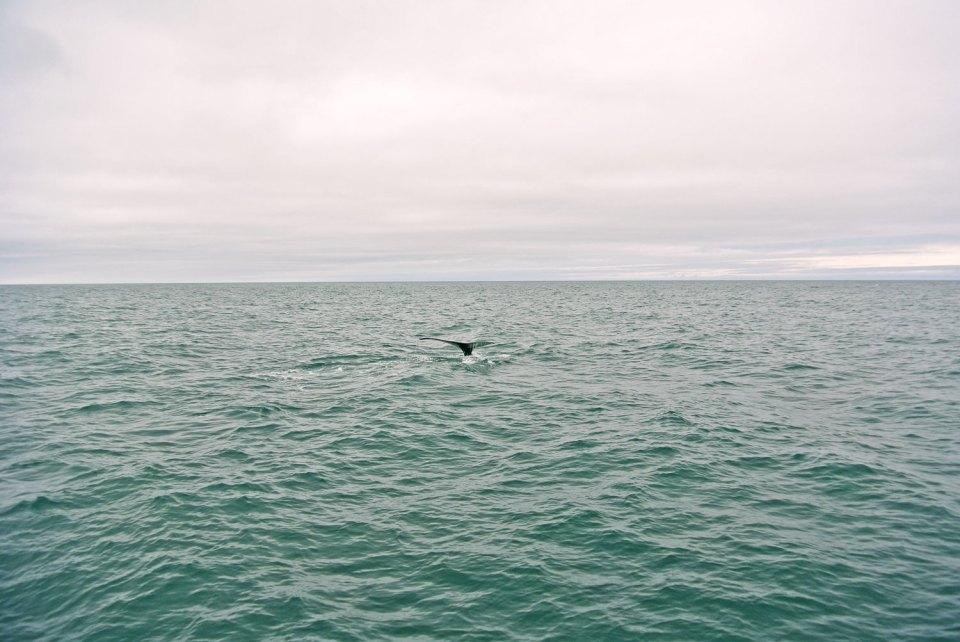 Whale Watching Húsavík Island