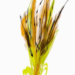 Overly Engineered Wheat