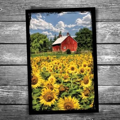 Door County Field of Sunflowers Postcard