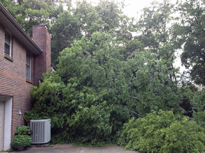 Tree1-400