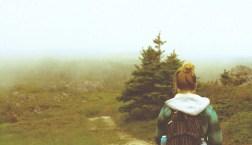 Maddron Bald Trail Smoky Mountains Albright Grove