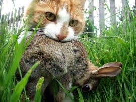 30cats-span-articleLarge