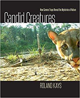 CandidCreatures