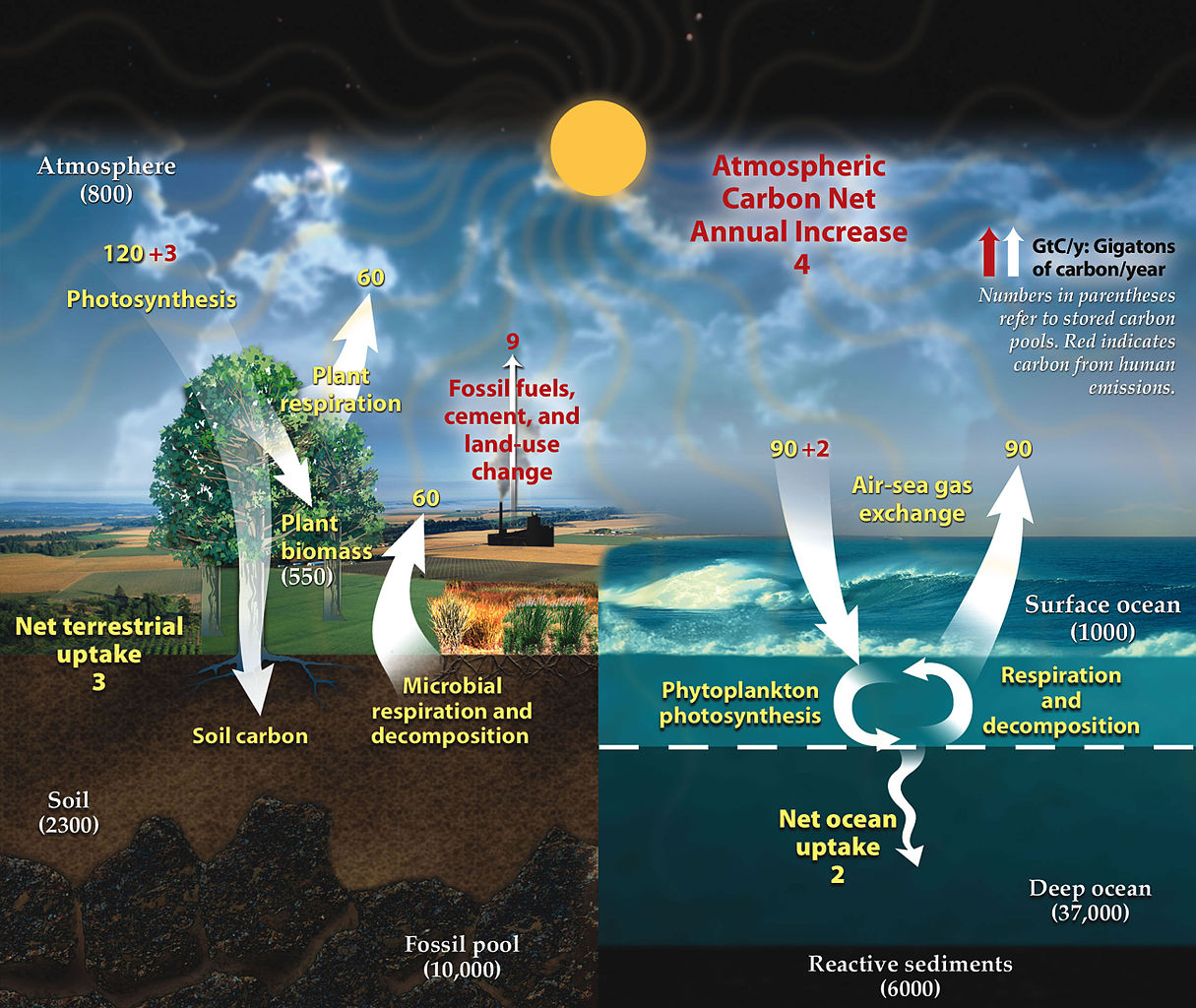 NASA Carbon_cycle