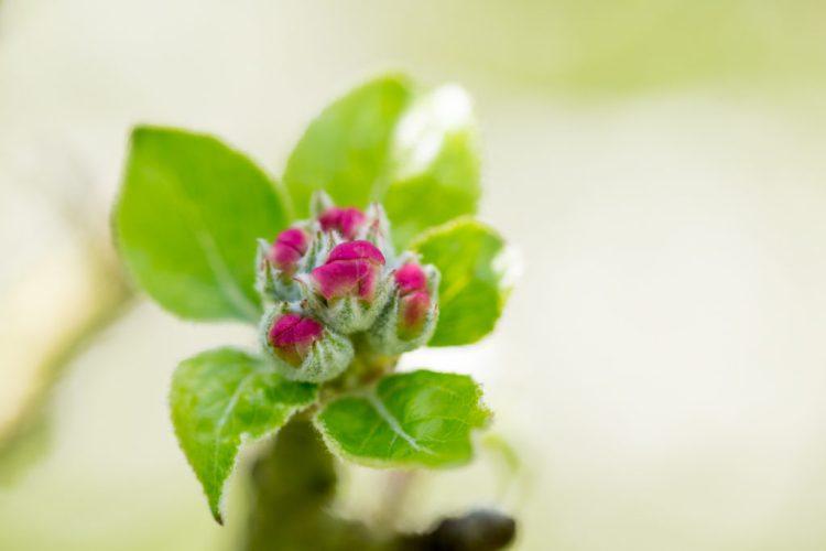 Cidrerie Kerné photographie dans les vergers au printemps