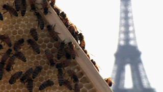 Les abeilles des villes