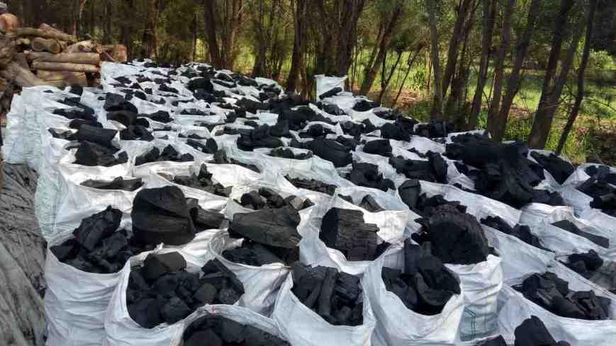 charcoal-casuarina
