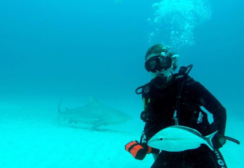bull shark diving playa del carmen