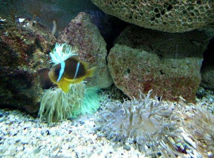 aquarium hurghada