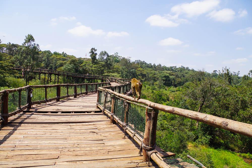 Nairobi Chronic Wanderlust-22