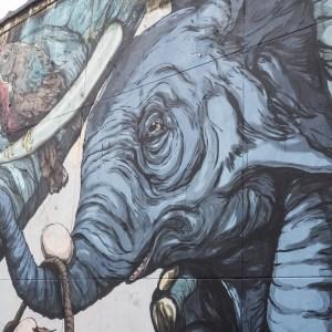 Concrete Canvas street art gent elefant