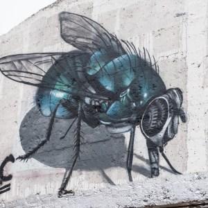 Concrete Canvas street art gent fly