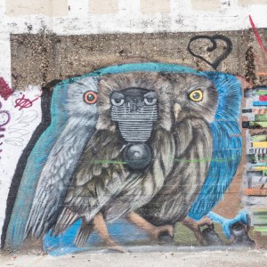 Concrete Canvas street art gent owl