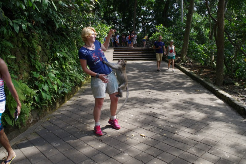 Bali Backpacker Monkey forest
