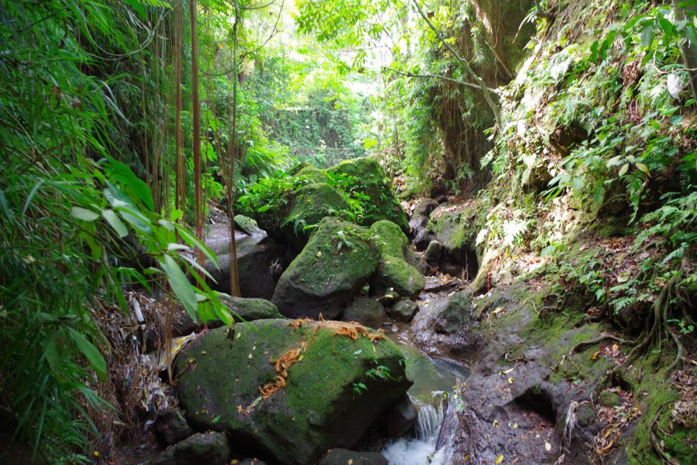 Bali Backpacker Monkey forest