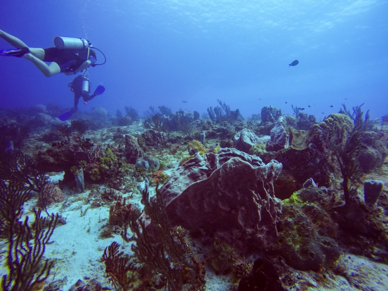 Cozumel Diving