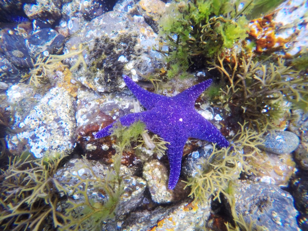 better underwaterphotos with gopro