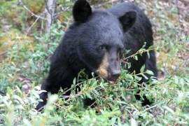 48 hours Jasper National park
