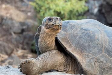 Reisegeschichten mit Trasty erzählen | Ein Traum von Galapagos