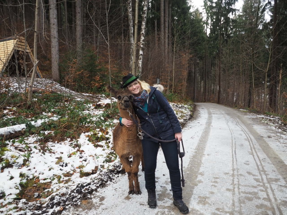 Alpaka Lama Wanderung Liechtenstein2