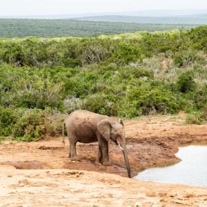 Port Elizabeth Addo Elephant Park