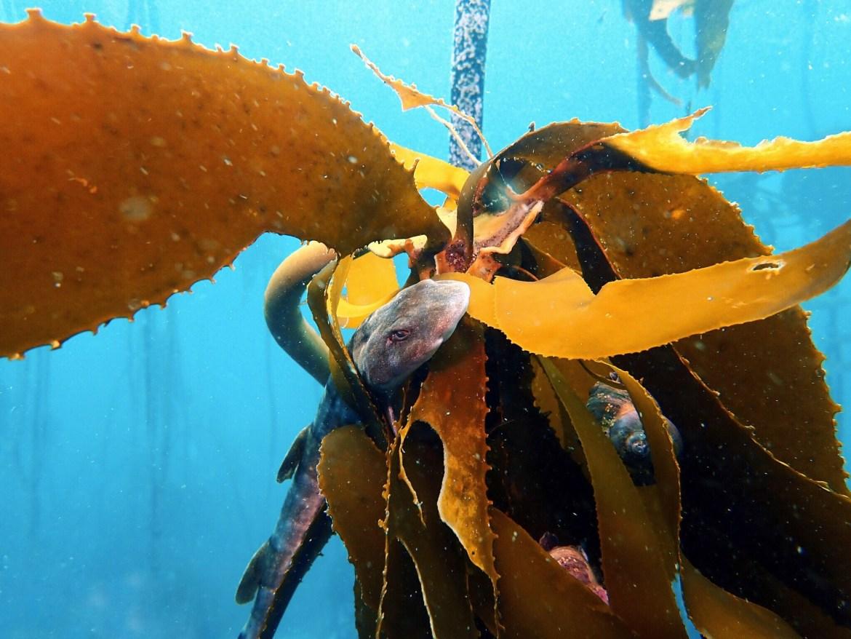schönere unterwasserfotos