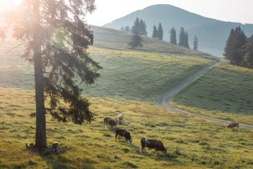 Autofreie Ausflugsziele in der Steiermark