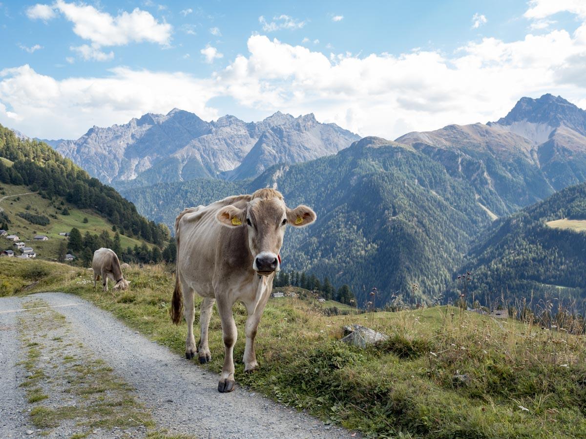 Via Engiadina Wanderung Scuol
