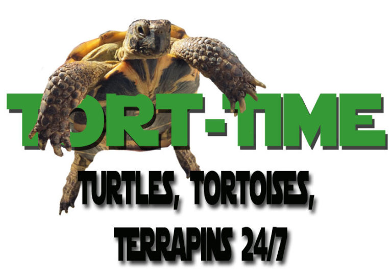 Tort TIme