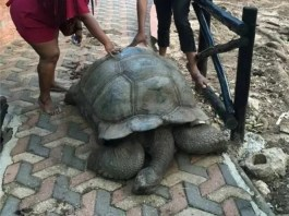 Alagba tortoise has died in Ogbomoso, Oyo state aged 344