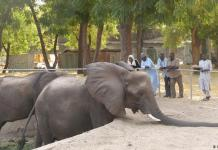 Borno government aims to revamp the Maiduguri zoo