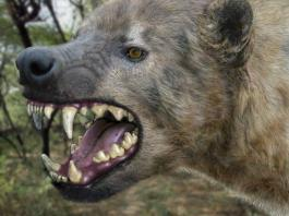 Panic as giant hyena escape from Imo zoo