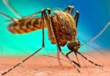 WHO aims to eradicate malaria in 25 countries by 2025